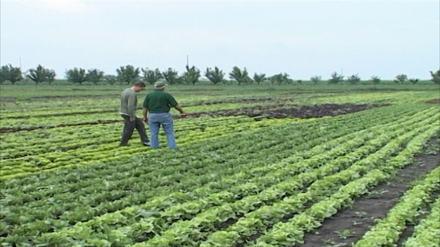 Zdrava hrana i dobra zarada