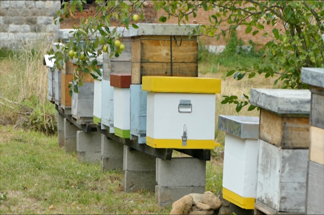 Pčelinjak Milošević