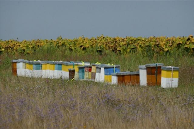 Šta bi država trebalo da uradi za pčelare?