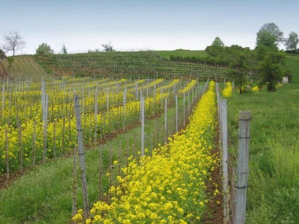 Ekološka proizvodnja vina