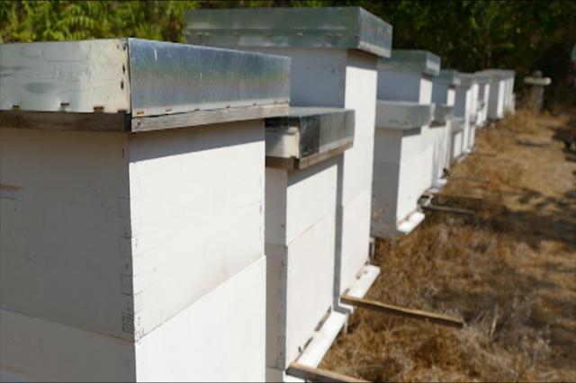 Pčelarenje na primorju