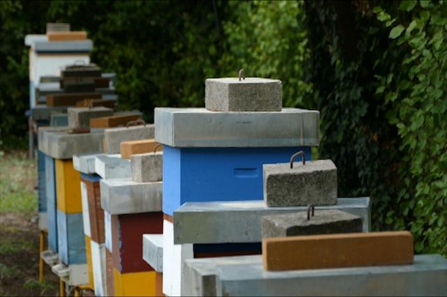 Sve više mladih pčelara