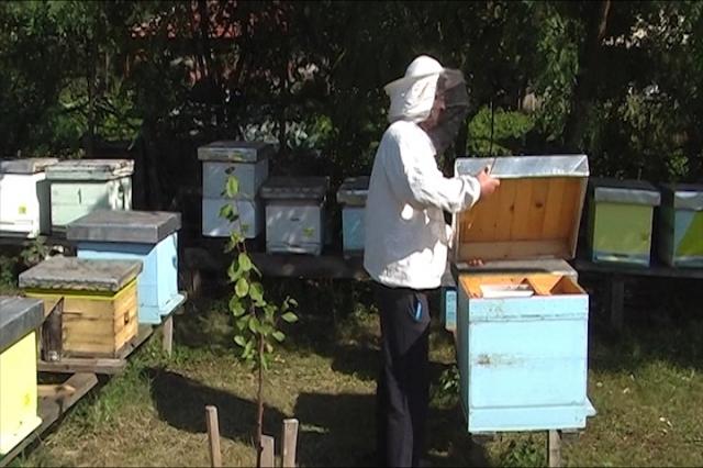 Škola za pčelare