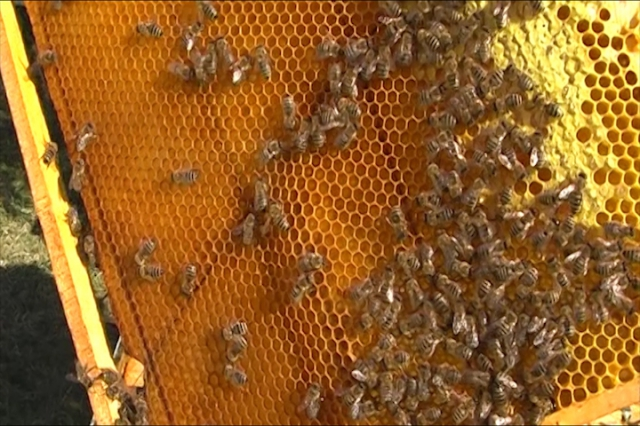 Grad Niš pomaže pčelarima
