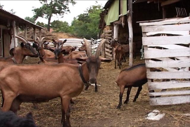 Korak ka unapređenju stočarstva