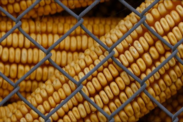 Skupo sušenje kukuruza