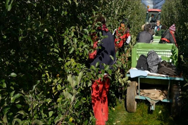 Poljoprivreda rezervoar sive ekonomije