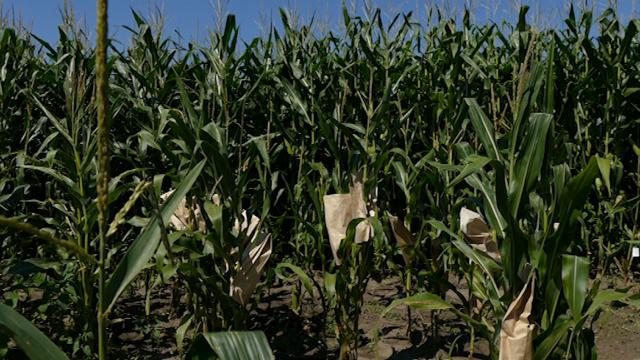 Pametna poljoprivreda
