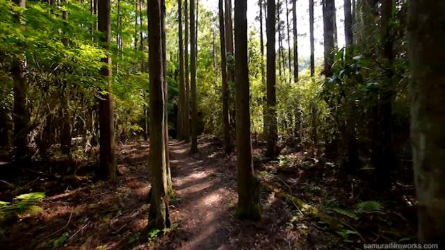 Kakve šume takva država