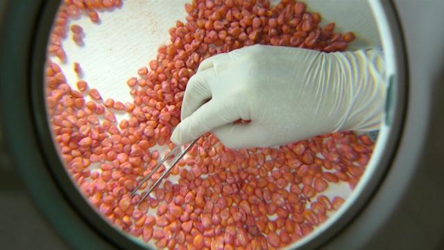 Tradicija stvaranja semena