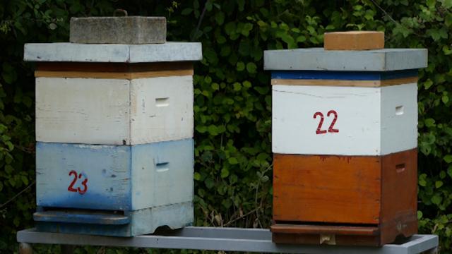 Bez uznemiravanja pčela