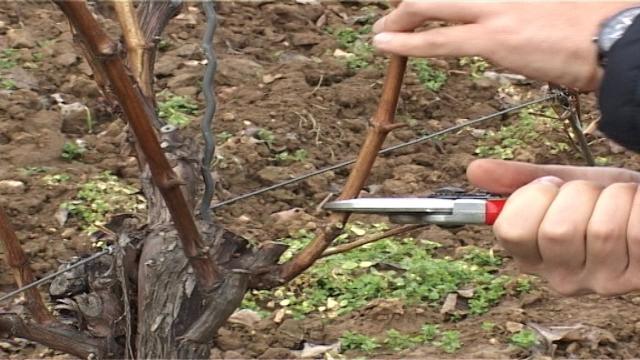 Osnovna agrotehnička mera