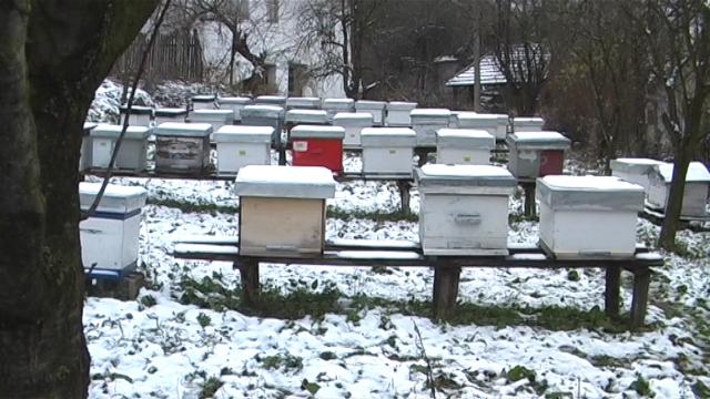 Pčelari zabrinuti