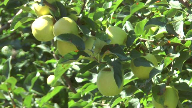 Za razvoj voćarske proizvodnje