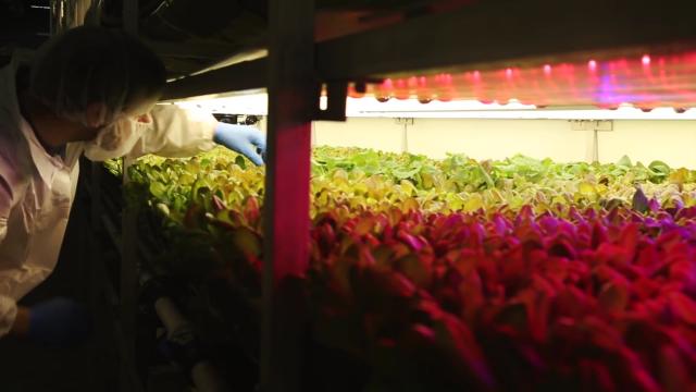 Inovacije u poljoprivredi