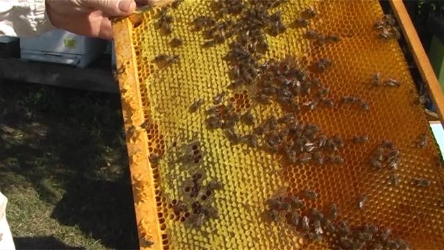 Suzbijanje spaljivanjem pčelinjaka
