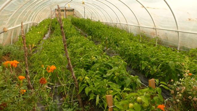 """""""Poljoprivredni inkubator za mlade na selu"""""""