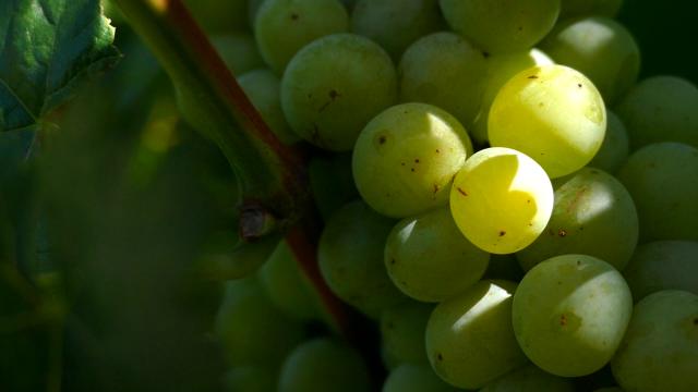 Saradnja balkanskih vinara