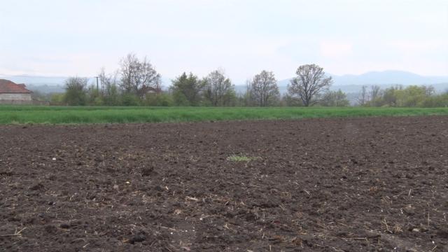 Počela setva kukuruza i suncokreta