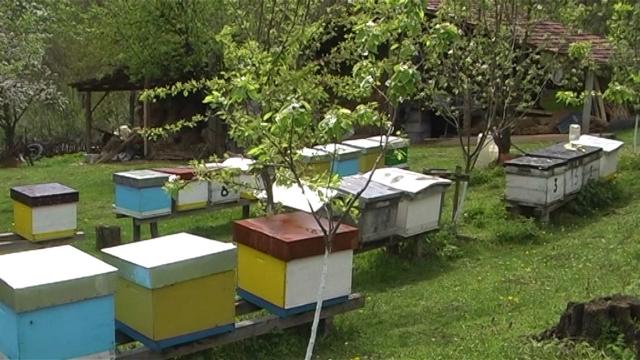 Država subvencijama stimuliše pčelare