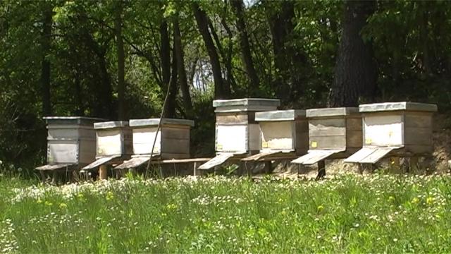 Loš početak sezone za pčelare