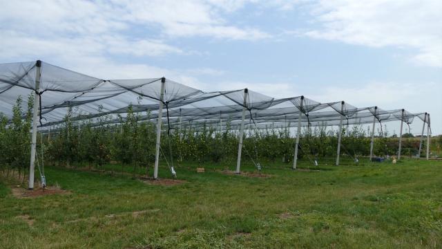 Investicije u podizanje zasada i preradu jabuka