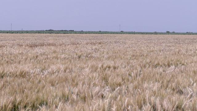 Očekuje se i rekordan izvoz brašna