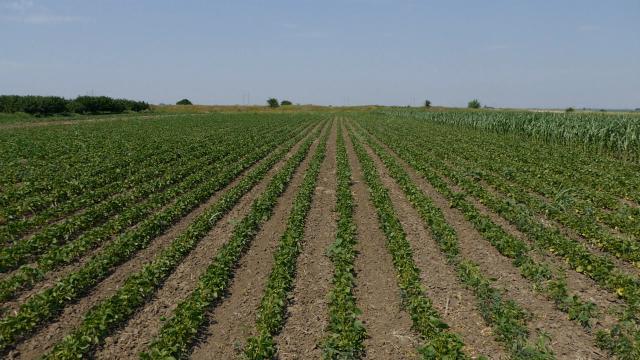 Budućnost Srbije u organskoj proizvodnji