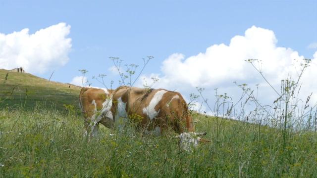 Livade i pašnjaci idealni za uzgoj stoke