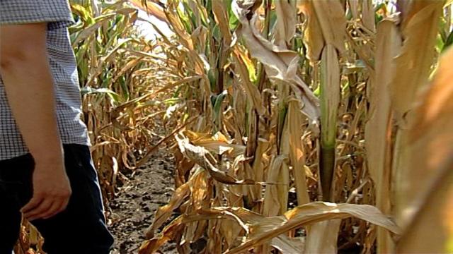 Rizik od suša i manjih prinosa