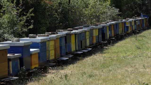 U Hrvatskoj značajana pomoć za pčelare