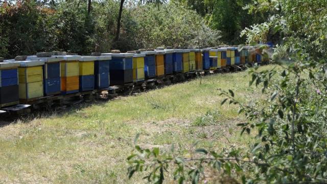 Zbog prskanja pčele sve ugroženije