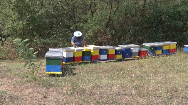 Analize potvrdile kvalitet boanskog meda