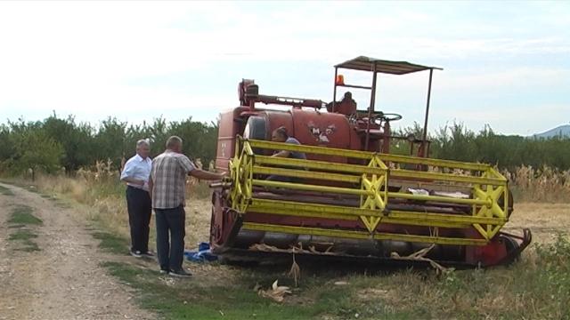 Žetva kukuruza privodi se kraju