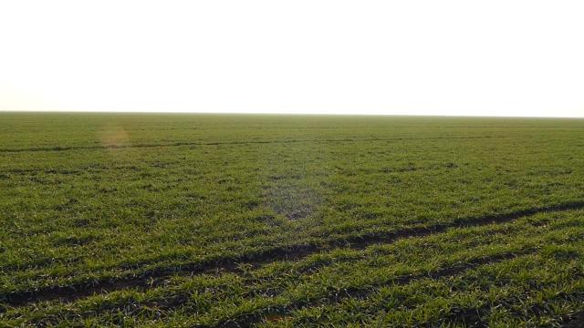 Početna cena za najkvalitetnije njive oko 33 000 dinara po hektaru
