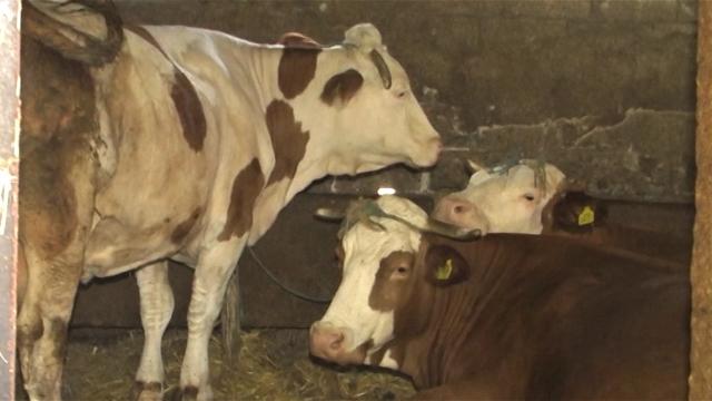 Država maksimalno da podrži stočare