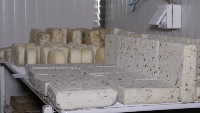 Prva međunarodna nagrada za neki sir iz Srbije