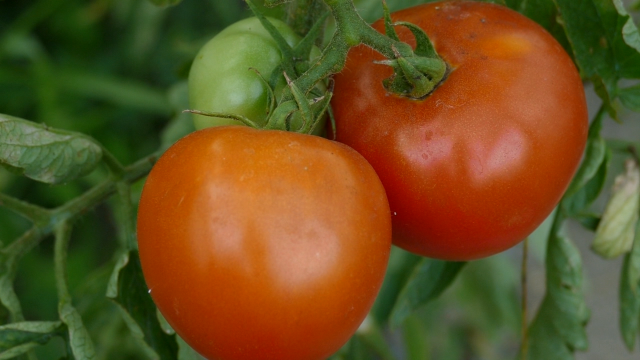 Organska proizvodnja zastupljena na manje od 1% površina