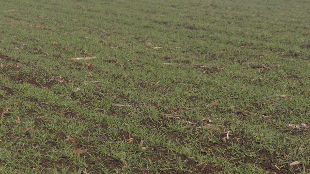 Dobra agrotehnika i navodnjavanje preduslov za uspešnu proizvodnju