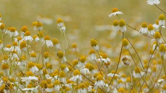 Veliko interesovanje za začinsko i aromatično bilje