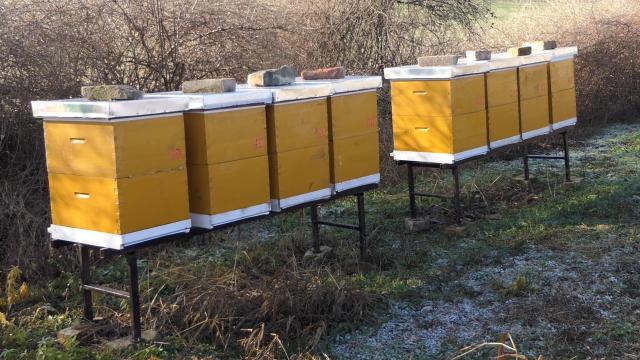 Svake godine novi slučaj trovanja pčela