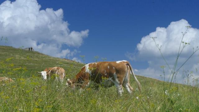 Stvoreni preduslovi za izvoz mesa u Tursku