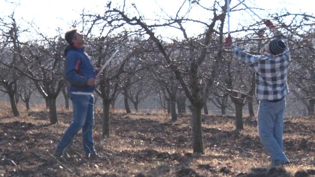 Prinos voća u Srbiji povećan za 2,5 puta