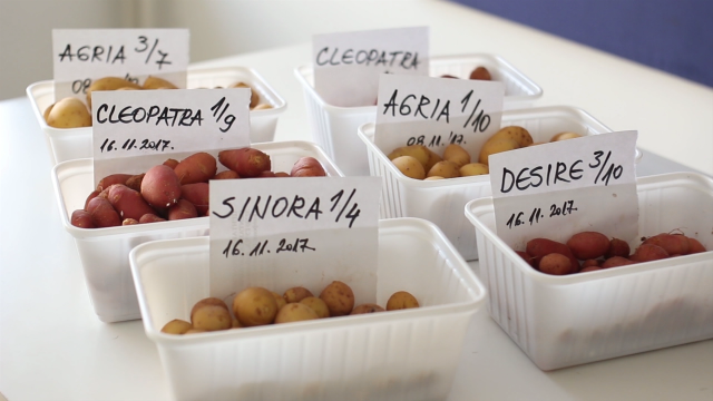 Centar za krompir u Guči primenjuje aeroponiku