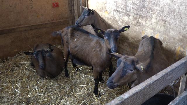 Mini farma koza