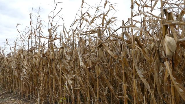 Poljoprivrednici traže veću pomoć države