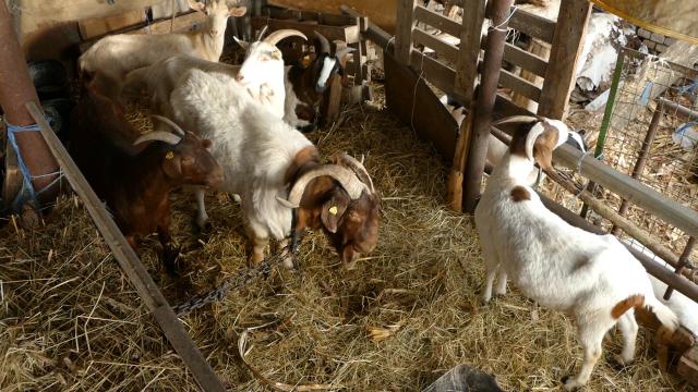 Usvojen program mera zdravstvene zaštite životinja