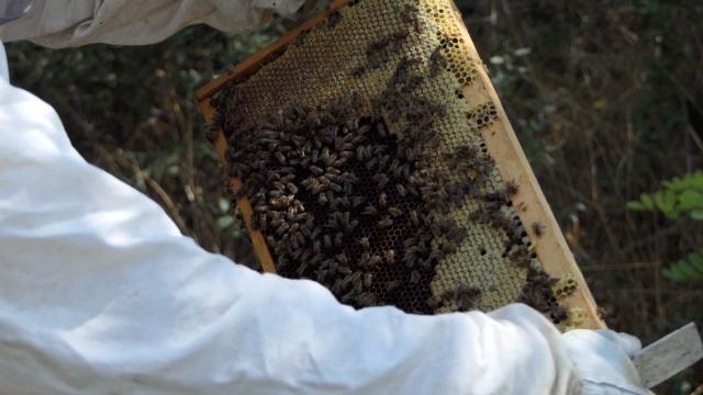 Bolesti pčela i pesticidi - najveći problemi proizvođača meda