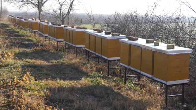 Pčela ne poznaje granice
