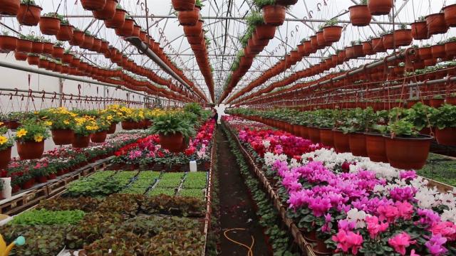 Cvećari se pripremaju za 8. mart